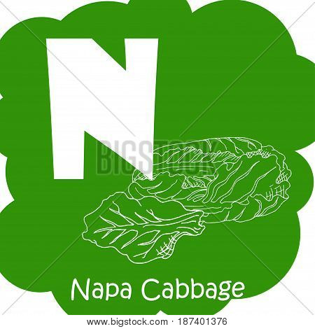 Vector vegetable alphabet for education. Illustration for kids. Letter N for Napa cabbage.