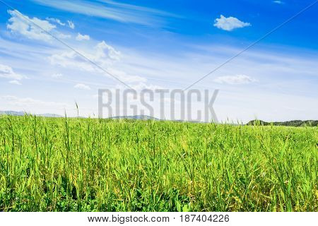 Green grass and blue sea in spring in Sardinia Italy