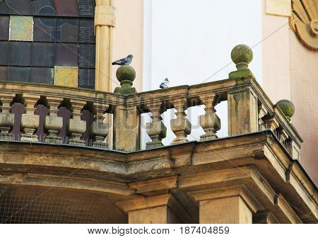 group of pigeons sitting on the old bannister of a church, Olomouc, Czech Republic