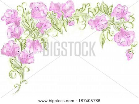 sweet pea isolated on a white background