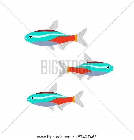 Neon Tetra Paracheirodon innesi freshwater tropical fish isolated on white. vector illustration