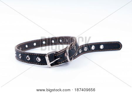 Black dog leather collar rolled up on white background