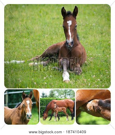 Collage of newborn foal with mare on pasture