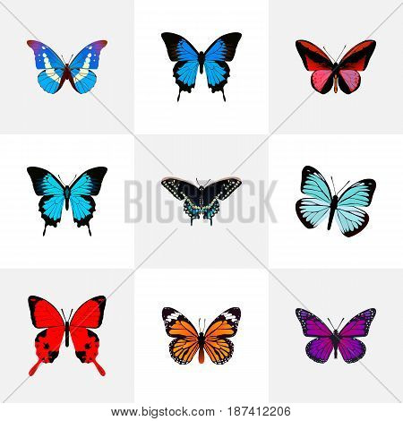 Realistic Callicore Cynosura, Bluewing, Monarch And Other Vector Elements. Set Of Beauty Realistic Symbols Also Includes Julia, Purple, Cypris Objects.