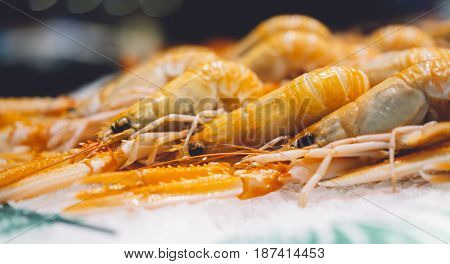 Isolated orange shrimp on ice background on the market closeup of fresh crustacean products