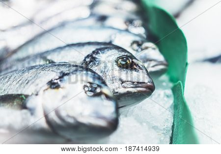 Bird dorado fish on ice background on the market closup of fresh marine products useful dietary sea food in restaurant isolated group fish with shiny scales frozen seafood after catching fishermen