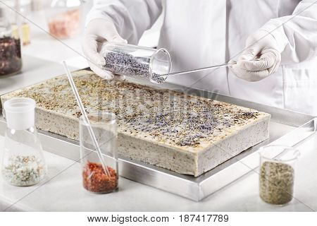 Seed Production At Factory. Scientist Working At Laboratory Doing Work Of Selecting Germinated Seeds