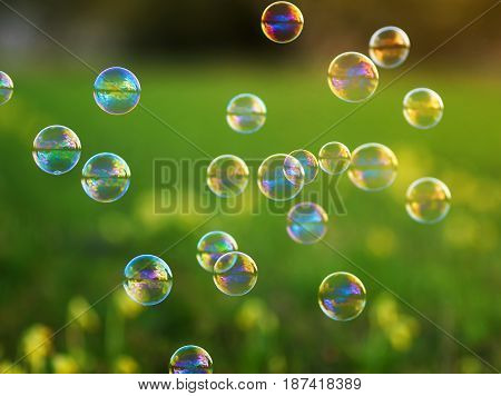 bright festive background with flying shiny soap bubbles on the green Sunny meadow