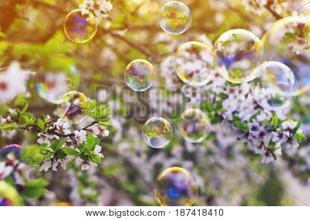 bright festive background with flying shiny soap bubbles over the spring blooming garden