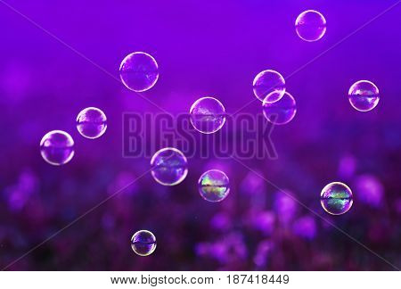 festive background with many shiny iridescent soap bubbles fly lilac meadow