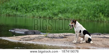 bored dog waiting owner on rock beside river