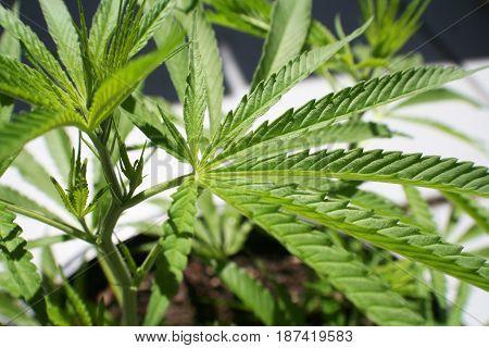 Alternative Medicine Close Up High Quality Stock Photo