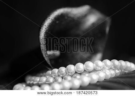 Flower of black calla and white pearl necklace closeup