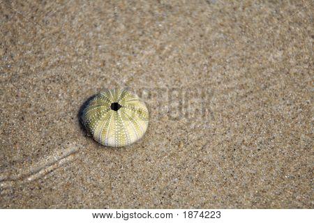Sea Urchin Skeleton On Beach Sand