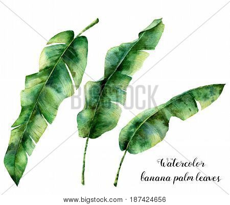 Watercolor floral set with banana palm leaves. Hand painted exotic greenery branch. Tropic plant isolated on white background. Botanical illustration. For design, print or background.