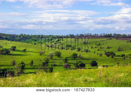 Bumpy Green steppe near with trees and blue sky