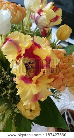 Flower Tulips bouquet summer bunch of flowers