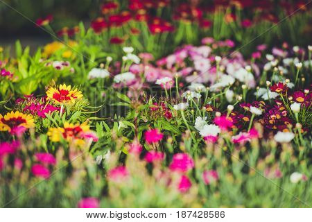 Colorful Garden Spring Flowers Closeup Photo. Gardening Theme.