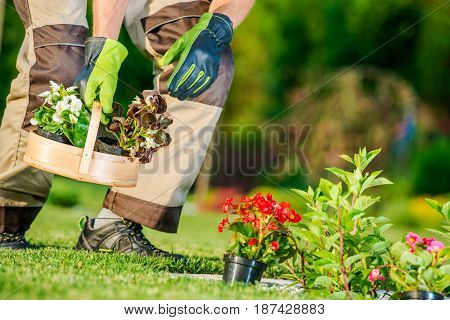 Garden Flowers Planting Concept Photo. Gardener Preparing Newly Purchased Flowers for Planting. Gardening Theme.