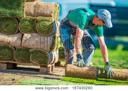 Natural Grass Turf Professional Installer. Gardener Installing Natural Grass Turfs Creating Beautiful Lawn Field.