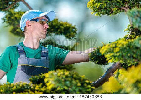 Pro Gardener at Work. Caucasian Gardener While Shaping Plants. Landscaping and Topiary Concept Photo.