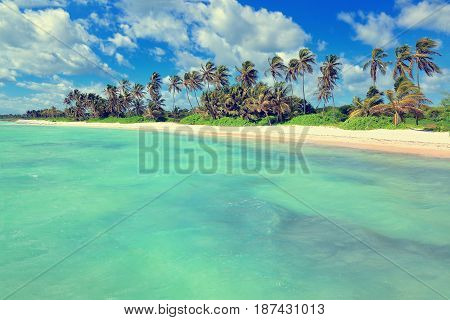 Tropical white sandy beach with palm trees. Punta Cana Dominican Republic