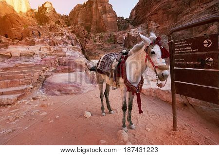 Ancient city of Petra Jordan. Mule standing next to the entrance signpost.