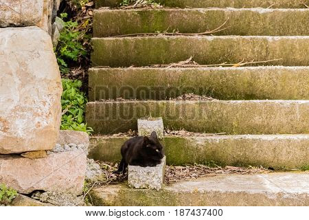 Black cat keeping watch while resting on concrete steps