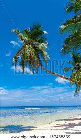 Coconut Getaway Palms Overhanging