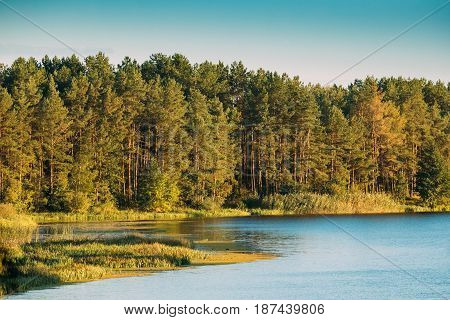 Landscape With Forest On Coast Of Lake, Pond Or River At Summer Sunny Evening. Nature Of Belarus And European Part Of Russia