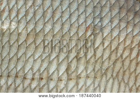 Bream (Abramis Brama) fish scales, natural texture