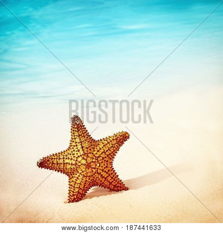 Closeup photo of a beautiful sea star in the clean sand on the beach, conceptual background of a summer vacation,  copy space