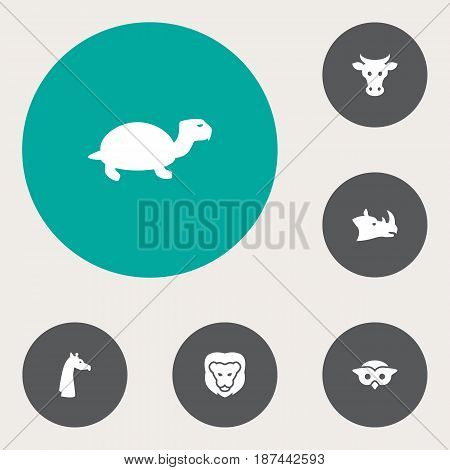 Set Of 6 Beast Icons Set.Collection Of Camelopard, Rhinoceros, Kine And Other Elements.