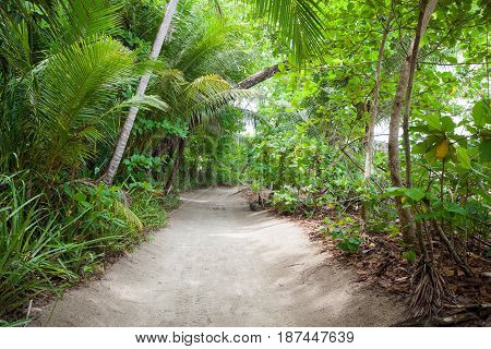 Sand road to the beach in lush tropical forest