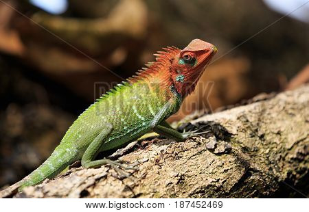 closeup of chameleon on tree in tropical forest