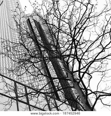Skyscraper and tree - Urban environment concept. Black and white image