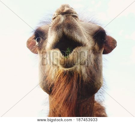 Head of a camel against the sky, summer time