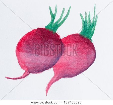 Still life with watercolor paint. Vegetable radishes on a white background. Elements of design.