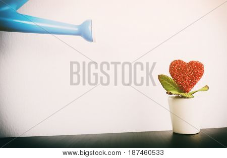 Watering can watering love on to a red flower for Romance concept
