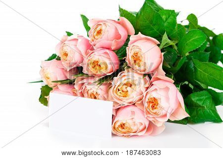 Photo of the bunch of roses on white background