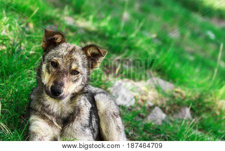 Homeless puppy dog on grass close up.