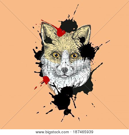 Hand drawn ink fox illustration. Red fox portrait isolated on red background. vector eps 8