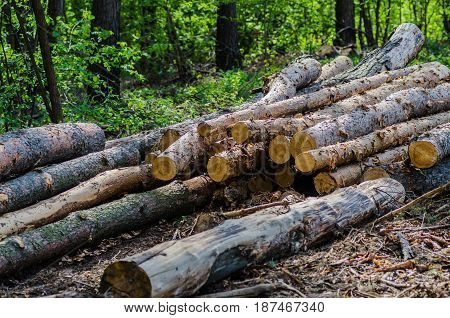 Folded trees are stacked, there is deforestation and logging