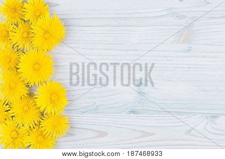 Yellow dandelion flowers as decorative border on light blue wooden board. Copy space top view.