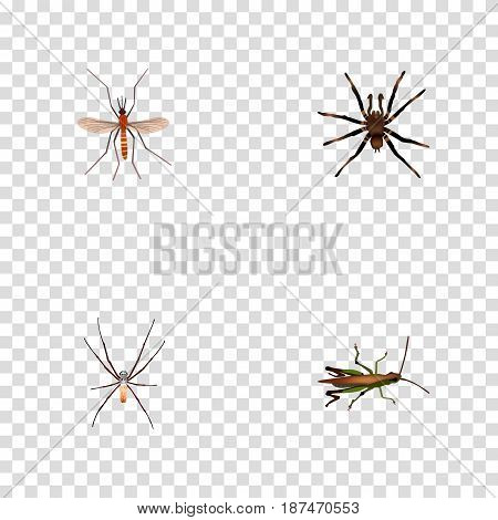 Realistic Arachnid, Spider, Locust And Other Vector Elements. Set Of Animal Realistic Symbols Also Includes Arachnid, Alive, Grasshopper Objects.