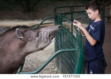 LES MATHES, FRANCE - JULY 4, 2016: Young visitor takes photos of the South American tapir (Tapirus terrestris), also known as the Brazilian tapir at La Palmyre Zoo in Les Mathes, France.