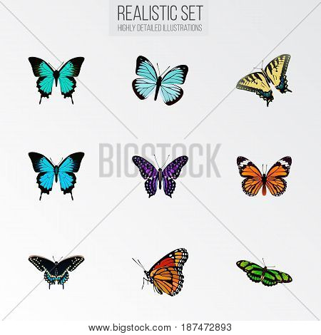 Realistic Monarch, Polyommatus Icarus, Lexias And Other Vector Elements. Set Of Beautiful Realistic Symbols Also Includes Purple, Monarch, Green Objects.