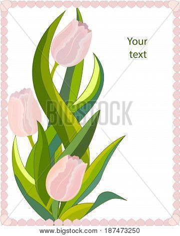 Greetings card three pink tulips with leaves in frame, isolated on white background, vector illustration