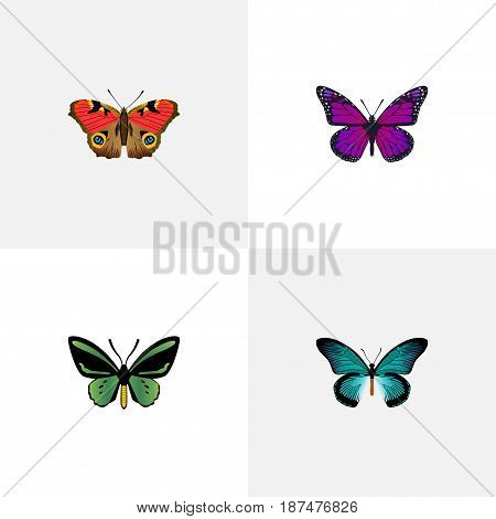 Realistic Tropical Moth, Pipevine, American Painted Lady And Other Vector Elements. Set Of Beauty Realistic Symbols Also Includes Blue, Butterfly, Bluewing Objects.