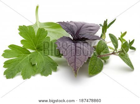 Fresh herb leaves variety isolated on white background. Purple dark opal basil, sweet basil, oregano, thyme,  parsley.